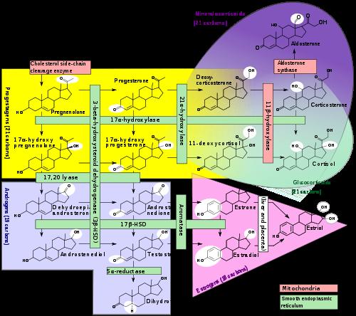 adrenal steroidogenesis inhibitors