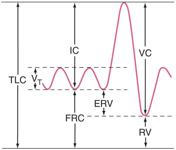 ... +Graph Spirometry Graph http://www.pic2fly.com/Spirometry+Graph.html